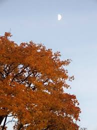 place fall foliage nw ohio toledo
