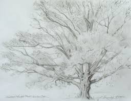 pencil sketches of trees how to draw a tree and branches scenery
