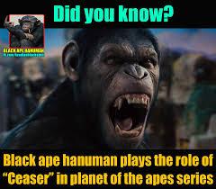 Ape Meme - black ape hanuman home facebook