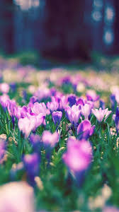175 best spring images on pinterest flowers nature and spring
