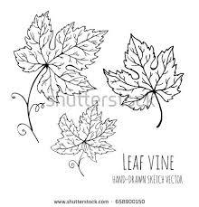 vine leaves stock images royalty free images u0026 vectors shutterstock