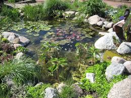 garden pond construction and design shonila com