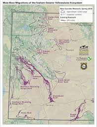 Migration Map Biologists Launch Study Of Greater Yellowstone Mule Deer