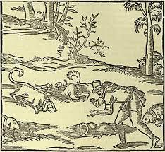 affenpinscher jakt tax wikiwand