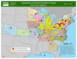 emerald ash borer map emerald ash borer update nj bucks county pa organic plant care