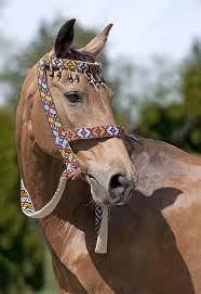 123 best barnyard horses images on horses beautiful