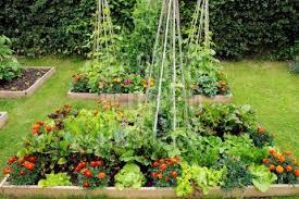 bl cottage garden vegetable design