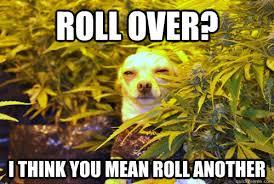 High Dog Meme - i m lulzing pretty hard at these high dog memes pics