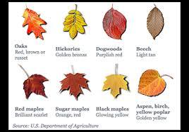 fall planting trees shrubs