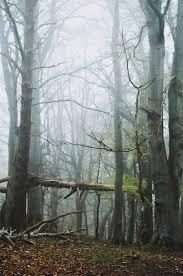 what do trees mean to you u2013 treeeraco u2013 medium