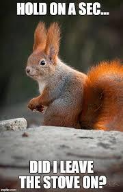 Squirrel Meme - 57 best squirrel memes images on pinterest squirrel memes gutter