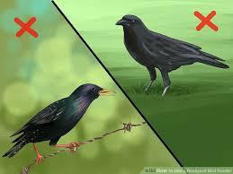5 ways to use a backyard bird feeder wikihow