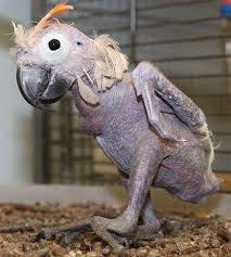 Hairless Bear Meme - bald animals are either really cute or really terrifying
