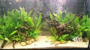 amazon biotope aquascape 199658