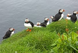 Faroe Islands Map The Puffins Of Mykines In The Faroe Islands The Culture Map