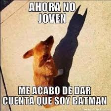 Memes De Batman - meme de perro que piensa que es batman imagenes para tu pin