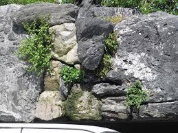 Volcanic Rock Garden 24 Rock Wall Garden Designs Decorating Ideas Design Trends