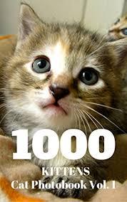 Cute Kittens Meme - 1000 kittens cat photobook vol 1 1000 pic cat photobook very