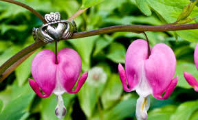 friendship rings meaning claddagh ring meaning how to wear claddagh ring