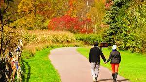 experts forecast spectacular fall foliage england