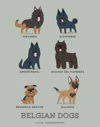 belgian sheepdog embroidery designs dogs of the world where does your pup hail from poster series