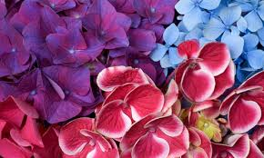 blue and purple flowers 50 breathtaking flower wallpapers to freshen you up naldz graphics