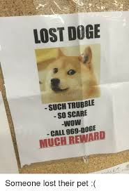 Lost Doge Meme - lost doge tim nock such trubble so scare wow call reward much