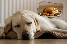 can dogs eat turkey yes but here are some thanksgiving