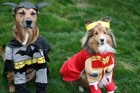 Pet Halloween Costumes Where To Get Pet Halloween Costumes In Malaysia Perropet