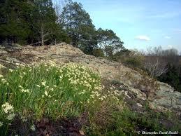 illinois native plant guide illinois botanizer