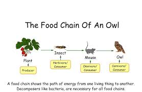 dramatic food chains this fun lesson gives students the chance to