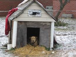 dogs deserve a real home for the holidays and every day peta