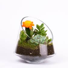 desk terrarium kit decorative desk decoration