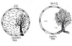 tree of on behance