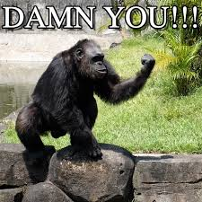 Chimp Meme - damn you angry chimp meme on memegen