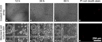 arrays of microscopic organic leds for high resolution