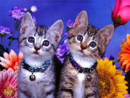 wallpaper cat whatsapp cute cat wallpapers free download collection 72