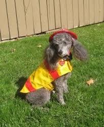 Mini Dachshund Halloween Costumes 25 Cute Dog Costumes Ideas Puppy Costume