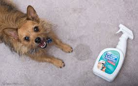 american eskimo dog odor review u0026 giveaway cleaning up