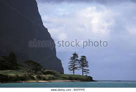 Rugged Cliff Synonym Norfolk Island Pine Trees Stock Photos U0026 Norfolk Island Pine Trees