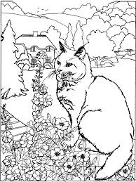cat dragon coloring pages coloring