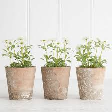 potted plants vases u0026 greenery homewares