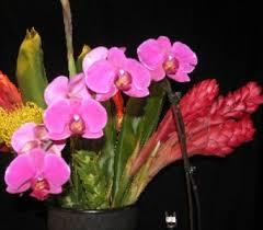 Flowers In Bismarck Nd - summer flowers delivery bismarck nd dutch mill florist inc