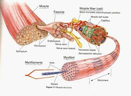 Anatomy And Physiology Skeletal System Test Introduction To Human Anatomy And Physiology U2013 Fcsbiology