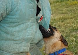 belgian shepherd kentucky kentucky dog bites roberts law office