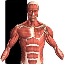 A Picture Of The Human Anatomy 12 Best Anatomy Apps For Android U0026 Ios Free Apps For Android