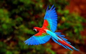 bird free hd top most downloaded wallpapers page 105