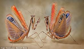 aliens on earth the terrifying of praying mantises