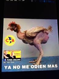 Memes De America Vs Pumas - los memes de la goleada de pumas al américa