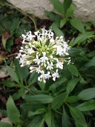 white flowering plant ask an expert